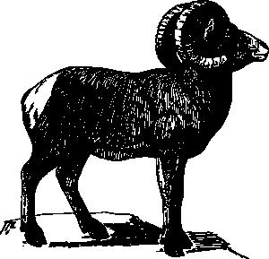 free vector Bighorn clip art