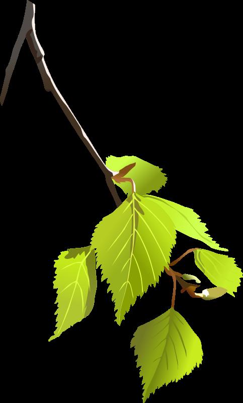 free vector Birch leafs