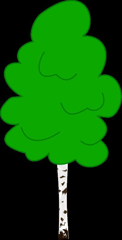 free vector Birch