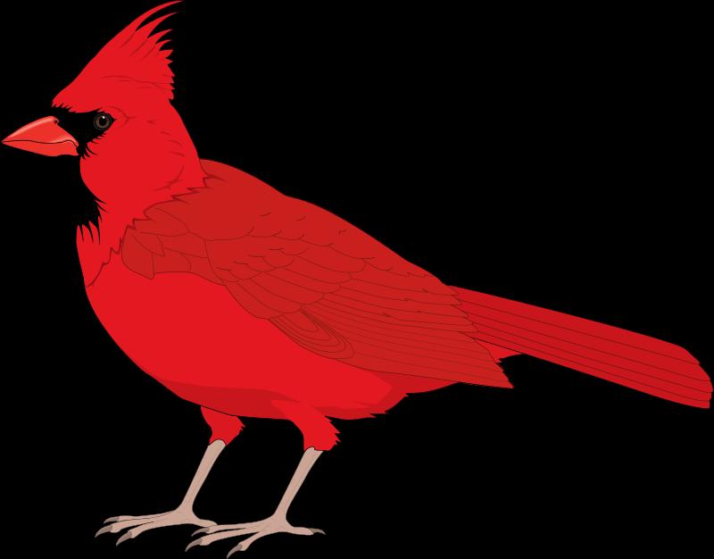 free vector Bird 08