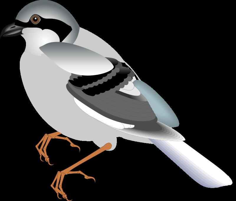 free vector Bird 12