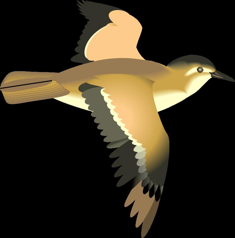 free vector Bird 19