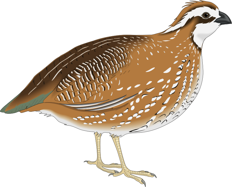 free vector Bird 20