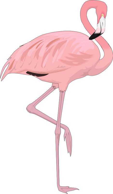 free vector Bird 27