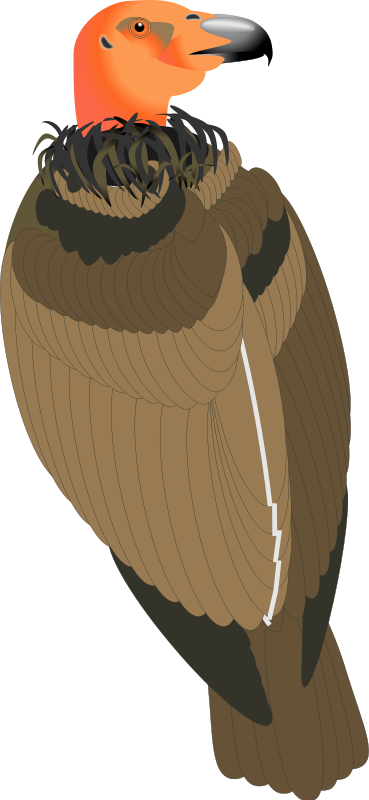 free vector Bird 29