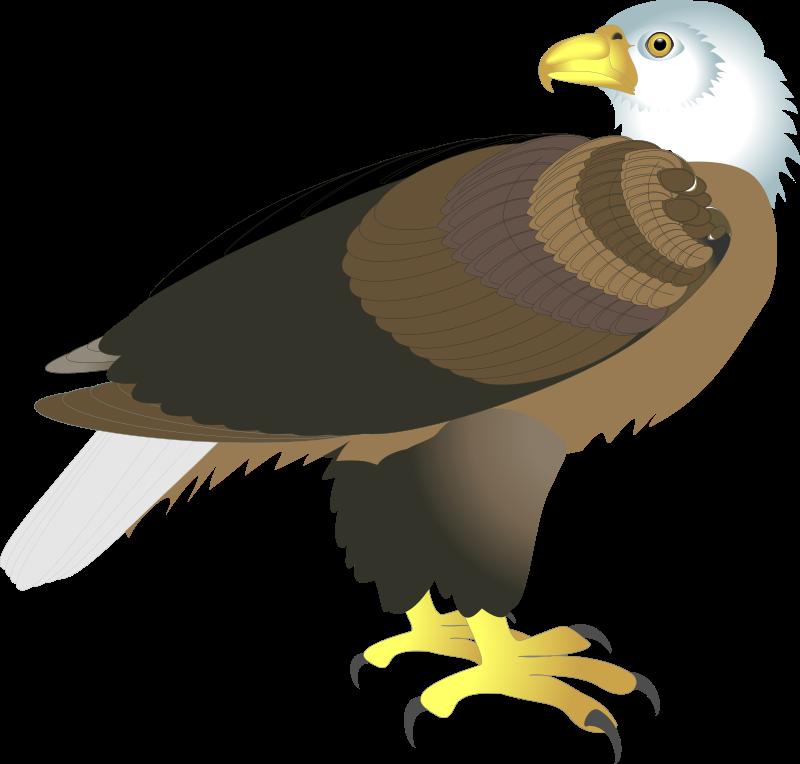free vector Bird 30