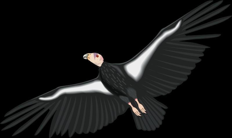 free vector Bird 31