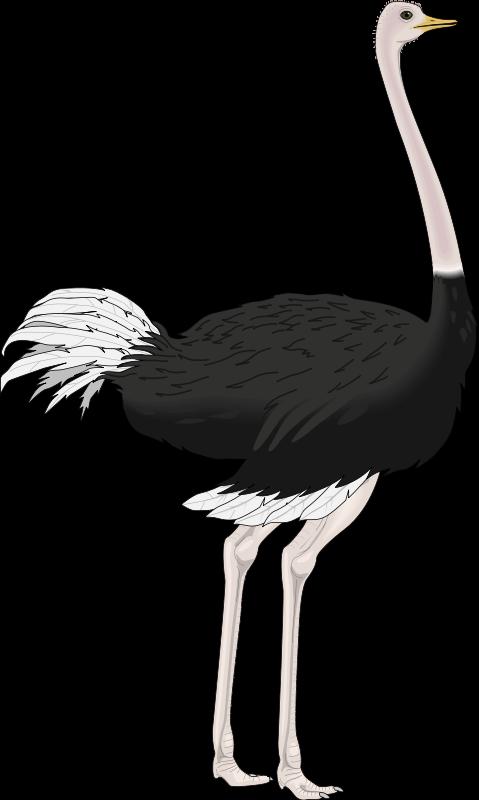 free vector Bird 40