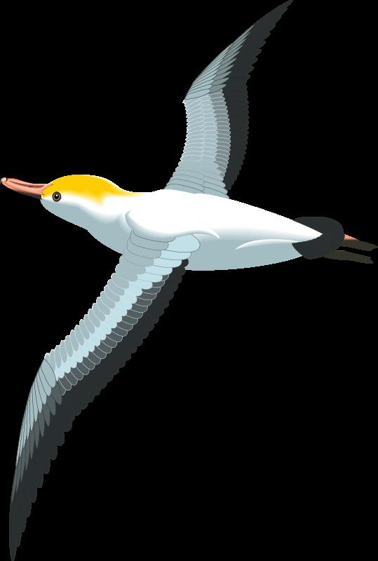 Bird 45 Free Vector 4vector