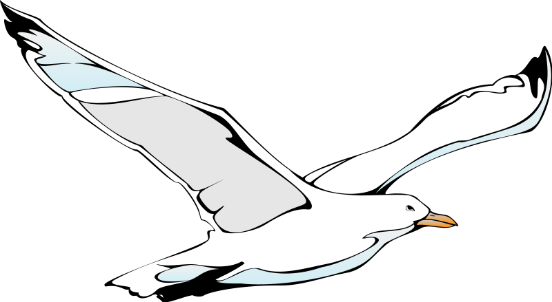 free vector Bird 46