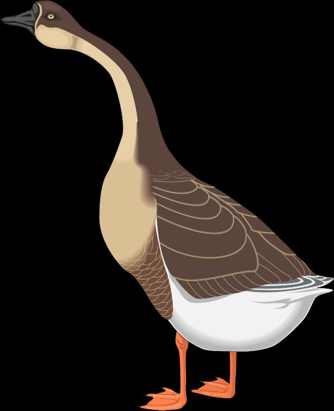 free vector Bird 48