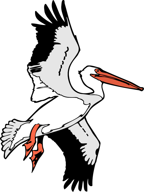 free vector Bird 53