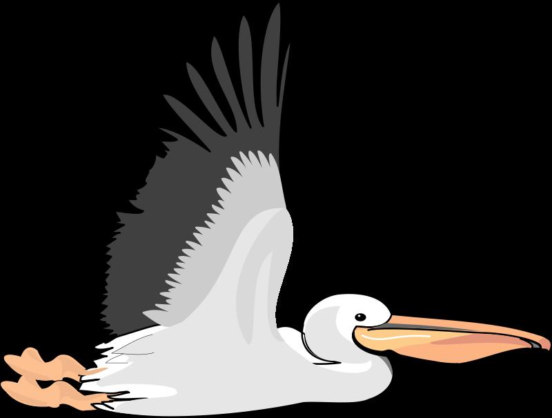 free vector Bird 54
