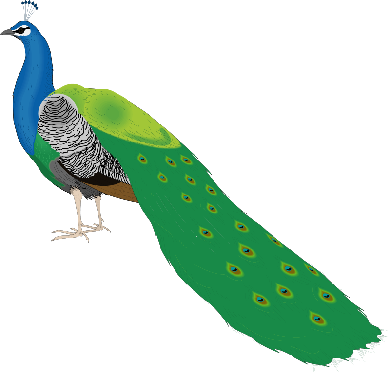 free vector Bird 55