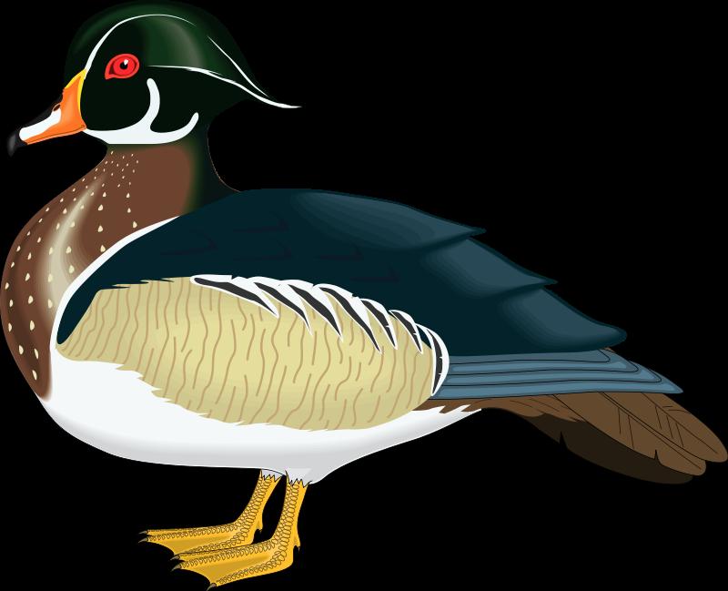 free vector Bird 57