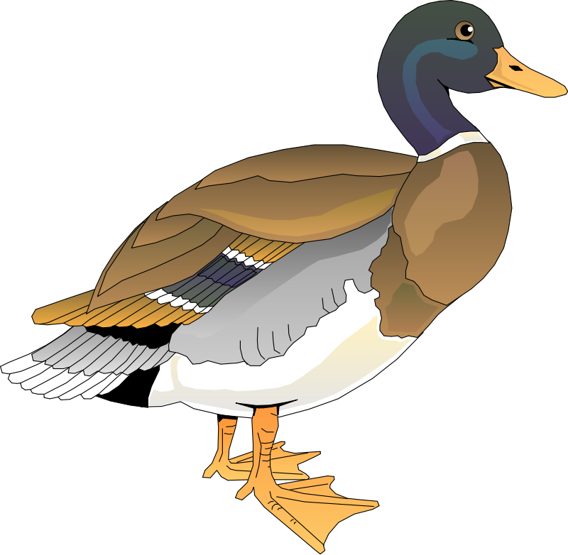free vector Bird 60