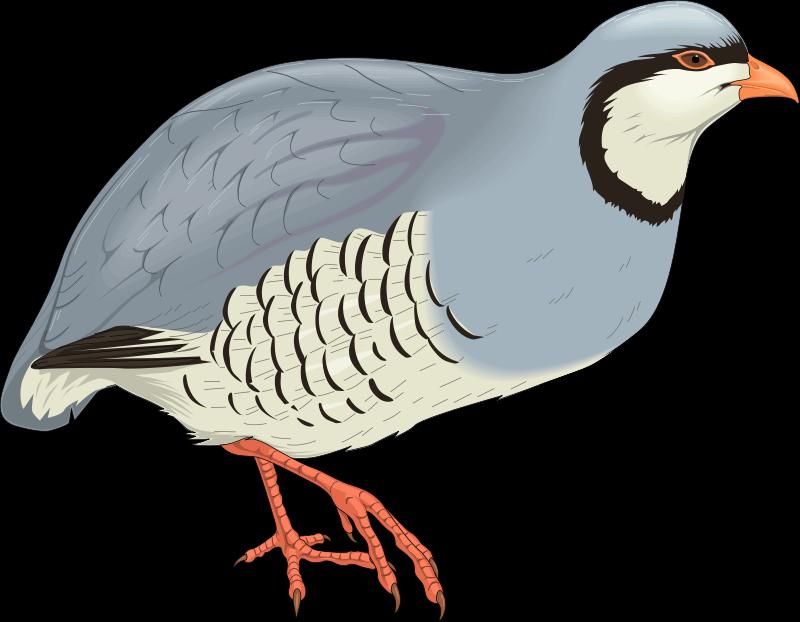 free vector Bird 63