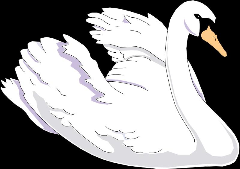 free vector Bird 66