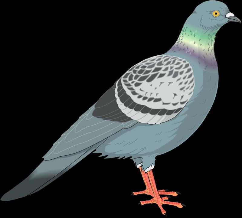 free vector Bird 69
