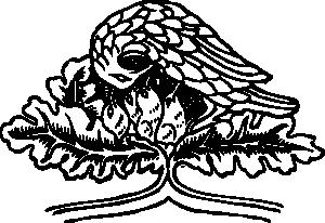free vector Bird And Chicks clip art