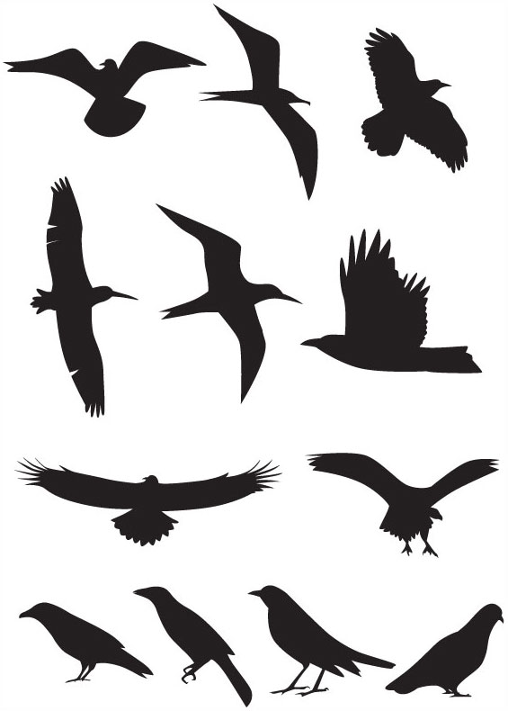 free vector Bird silhouette vector