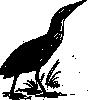 free vector Bittern Bird clip art