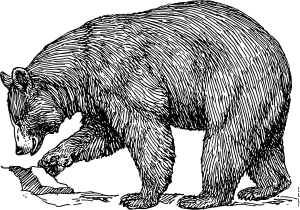 free vector Black Bear clip art