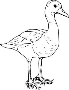 free vector Black Bellied Wisteling Duck clip art