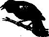 free vector Black Bird clip art