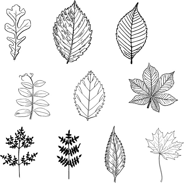 free vector Black leaves vector