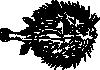 free vector Blowfish clip art