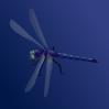 free vector Blue Dragonfly clip art