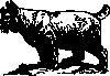 free vector Bobcat clip art