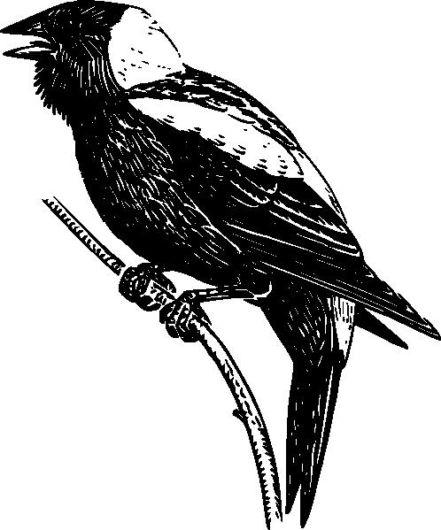 free vector Bobolink clip art