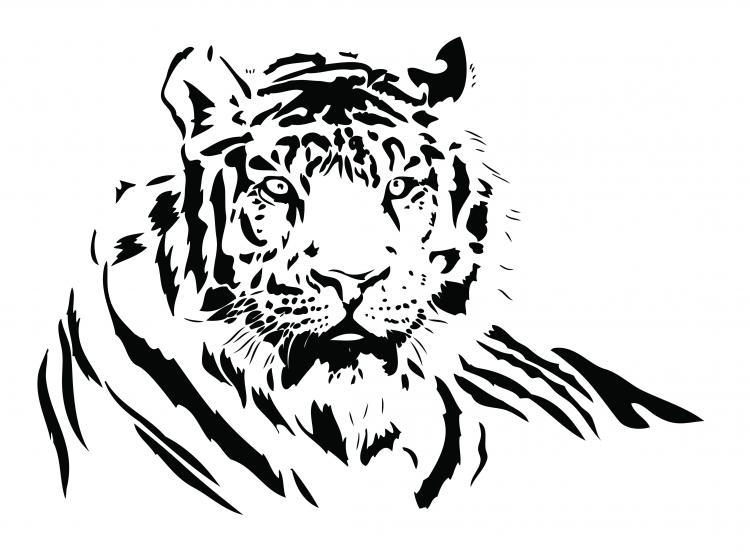 Drawing Lines Using Svg : Both black and white tiger vector free
