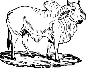 free vector Brahma Bull clip art