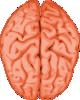 free vector Brain clip art