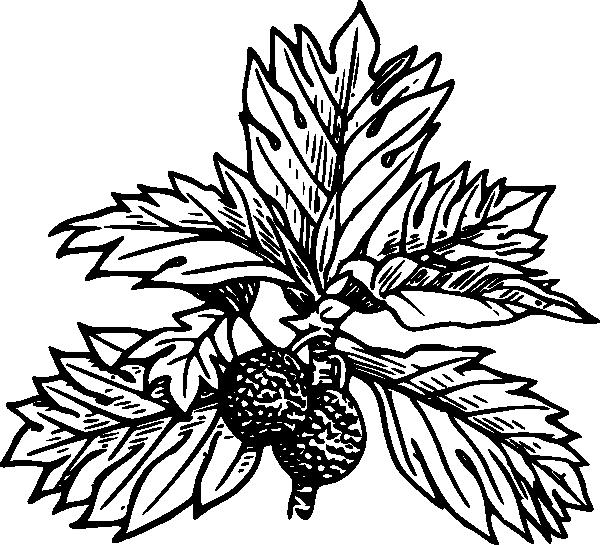 free vector Breadfruit clip art