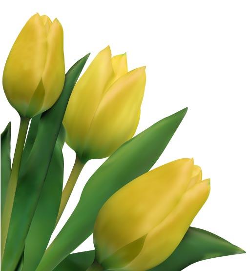 free vector Bright tulips 03 vector