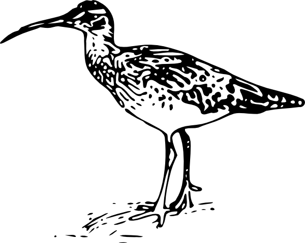 free vector Bristle Thighed Curlew clip art