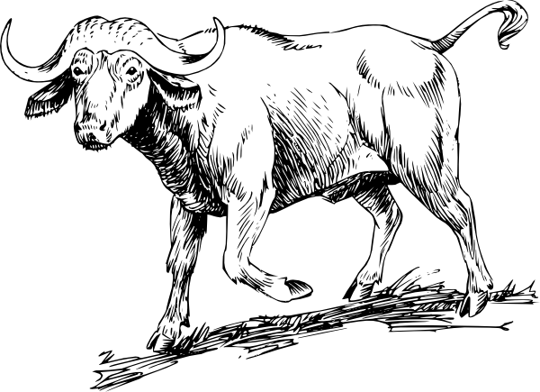 free vector Buffalo clip art