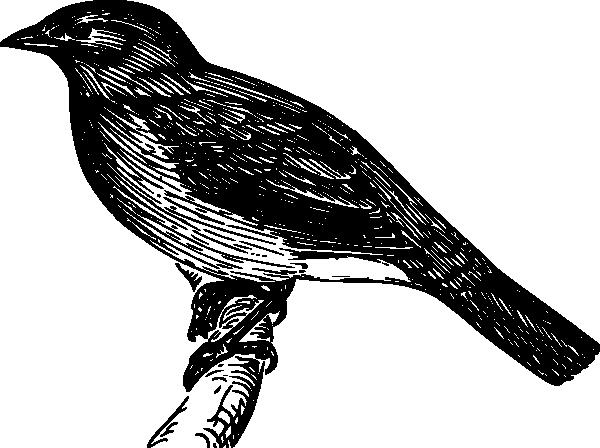 free vector Bulbul clip art