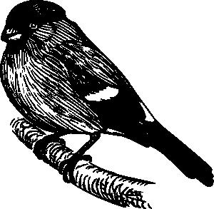 free vector Bullfinch clip art