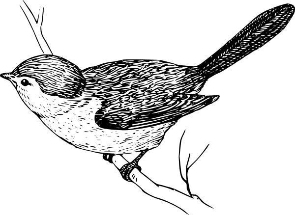free vector Bushtit clip art