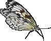 free vector Butterfly clip art 119133
