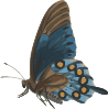 free vector Butterfly Papilio Philenor Side clip art
