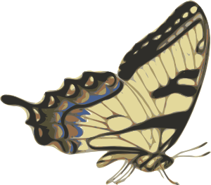 free vector Butterfly Papilio Turnus Side View clip art