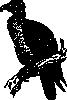 free vector Buzzard clip art