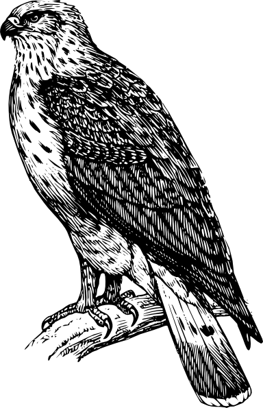 free vector Buzzard Raptor clip art