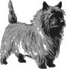 free vector Cairn Terrier clip art 127947